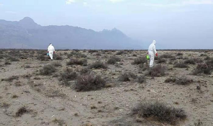 海勃湾区植被站鼠疫防控灭鼠工作进展情况